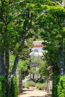 Chemin ombragé menant vers une des grilles du château