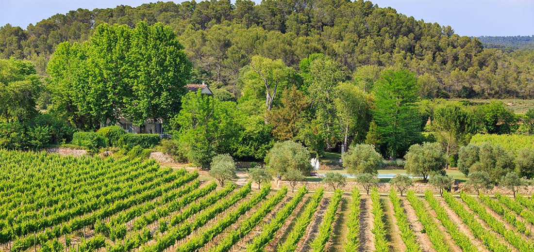 Des vignes en clairières